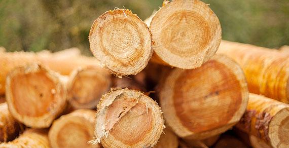 Produkte aus Rundholz für Ihr Traumhaus Massivholzhaus Südtirol